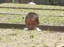 A child with some seedlings