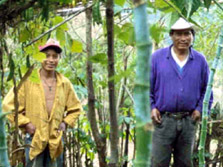 Two male workers in the forest